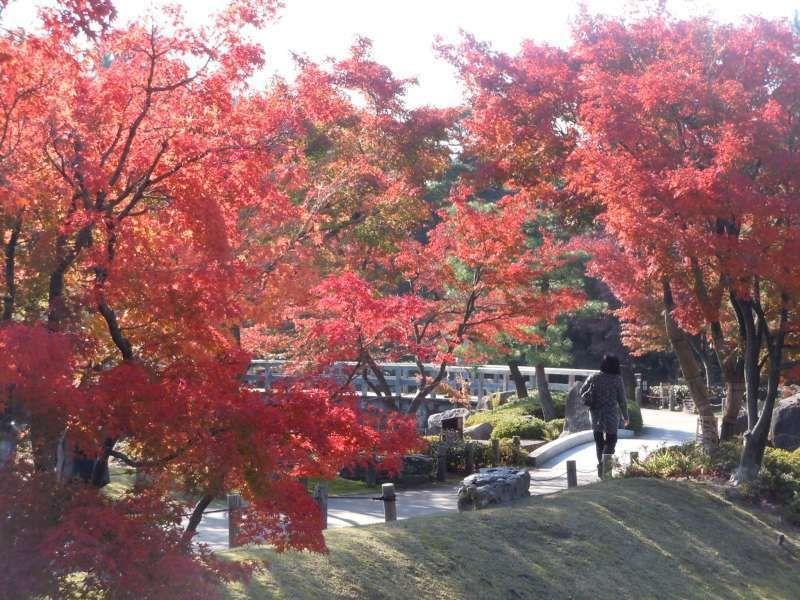Autumn color in Tokugawa garden
