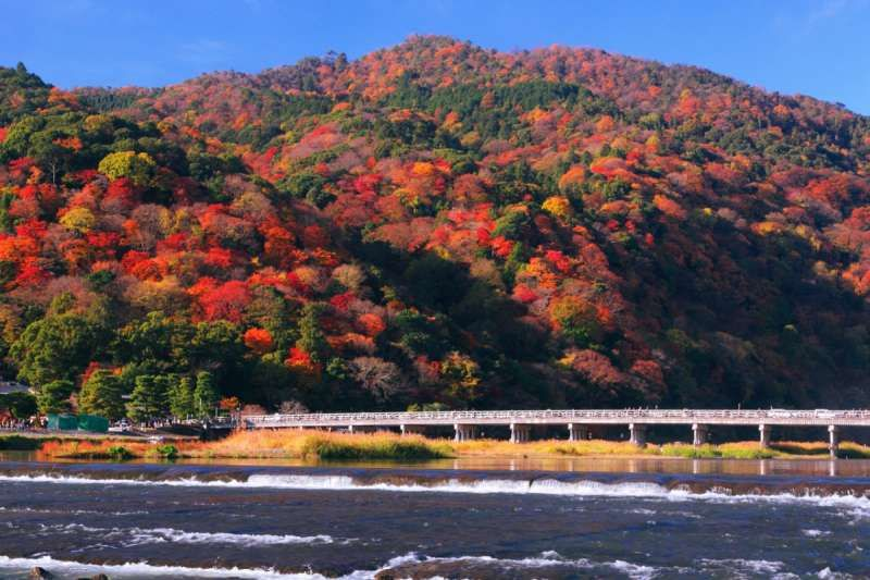 In autumn tree leaves turn yellow and red in Arashiyama district!