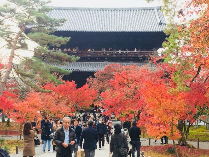 Lá đỏ của Chùa Tòukuji, Kyoto Autumn of Tofukuji temple, Kyoto