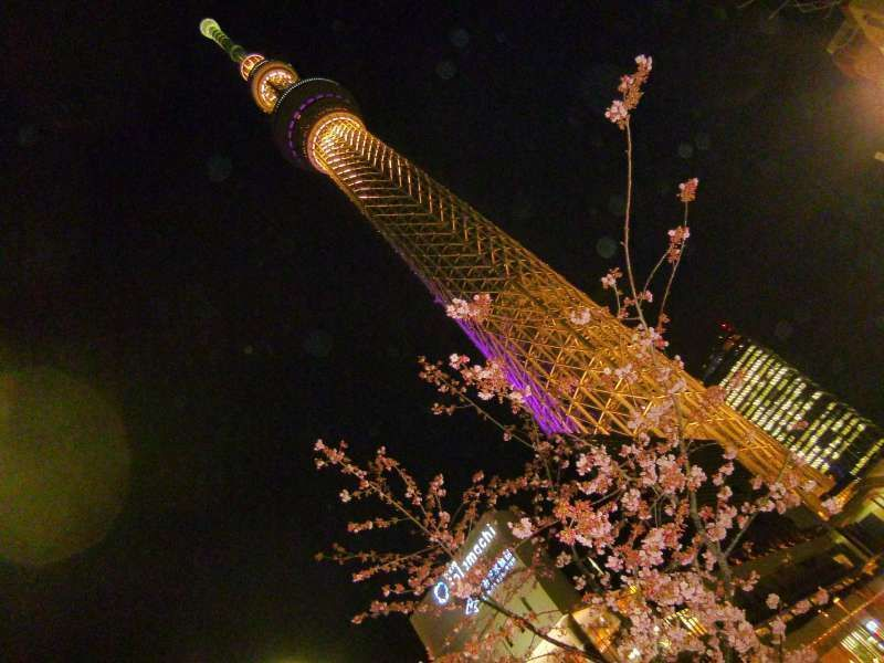 A night view of Tokyo Sky-tree. The man-made fruit of state-of-the-art technology and the plum blossoms, a gift from nature, are making a perfect match, aren't they?