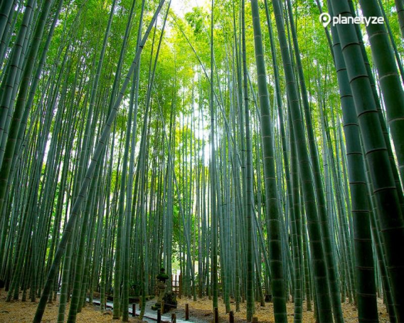 Hokokuji Temple, one of popular Zen Buddhist temples in Kamakura, is well-known for its beautiful and serene bamboo forest.