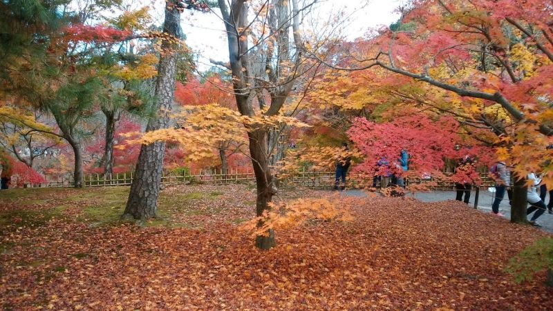 This is autumn leaves  in end of November.  In Japan we have four distinct seasons, and especially  in autumn  leaves season 