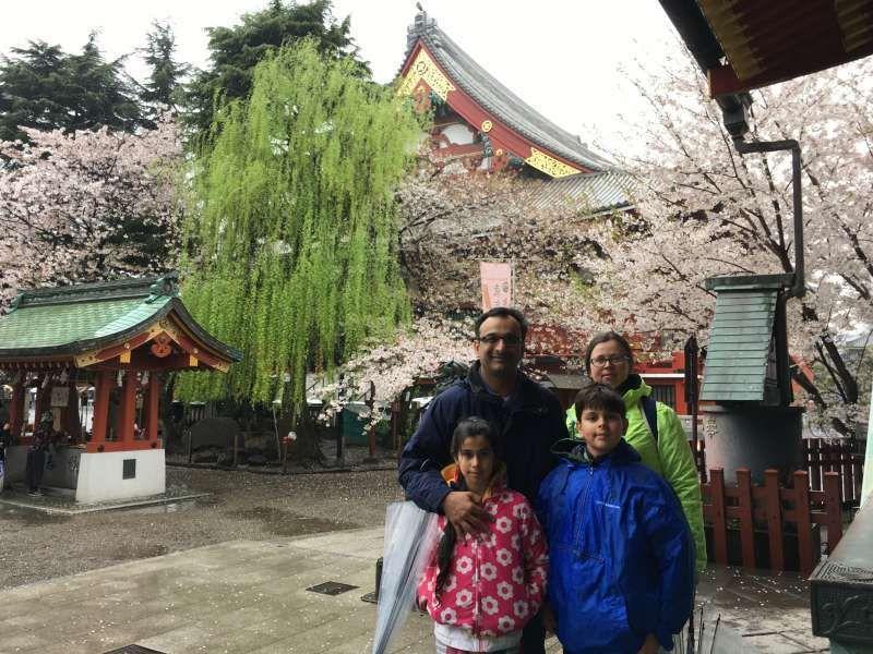 Asakusa Shrine, roof of Sensoji, Cherry blossom and willow as background! beatiful contrast