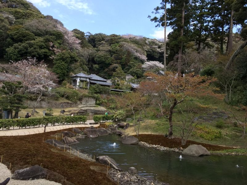 This is the garden of one of the highest ranked Zen Buddhist temple called Enkakuji temple. The garden is traditional Japanese garden called borrowing landscape garden which utilize the nature surrounding the building.