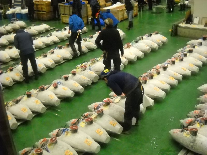 Toyosu is the largest fish market in the world. Tuna auction begins at 5:30.