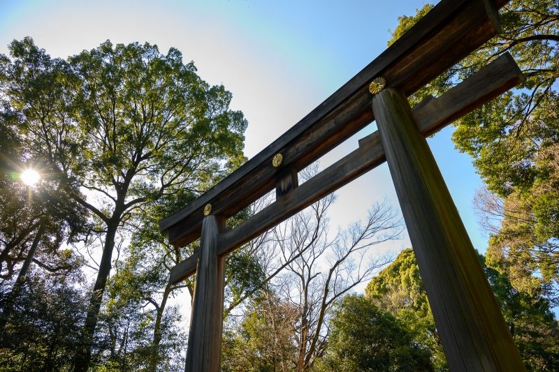 Meiji-jingu shrine. Surrounded by 100 years forest. Sacred atmosphere in the very center of town.
