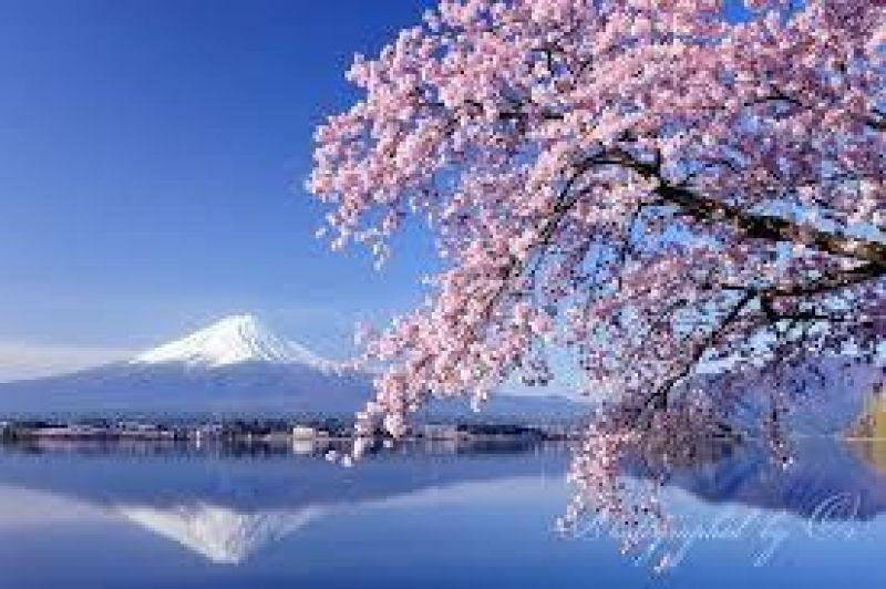 櫻花與富士山