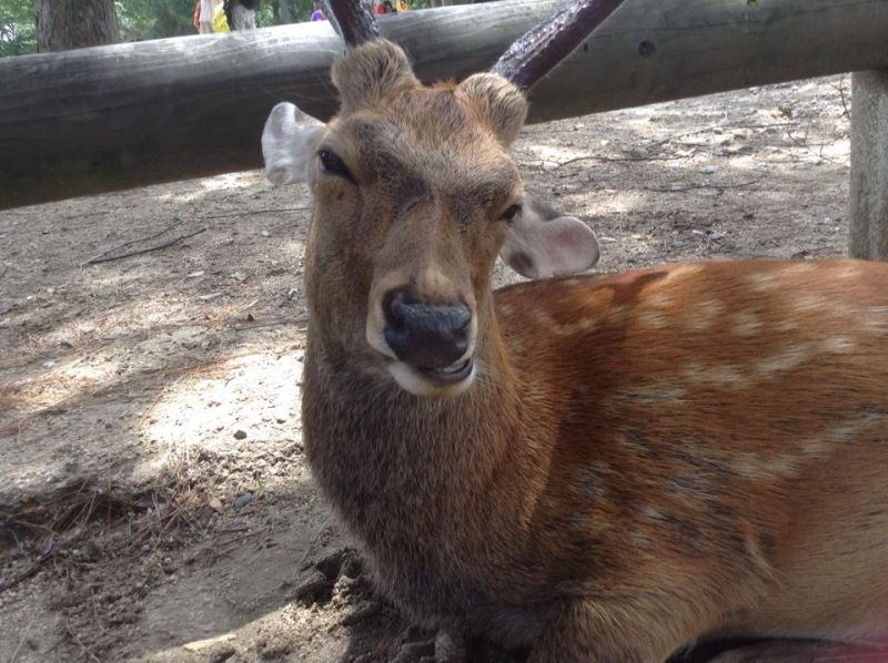 You can meet friendly wild deers in there. In Nara park