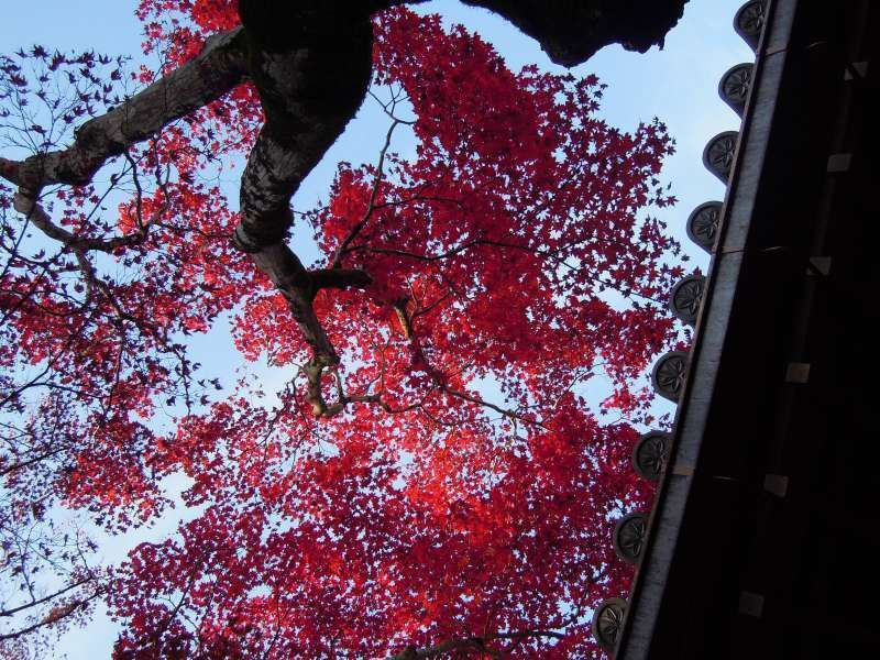 At Jojako-ji Temple, Arashiyama, Kyoto