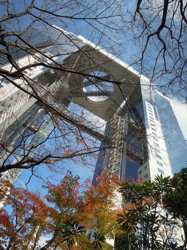 Umeda Sky Building seen through colored maple leaves in late December