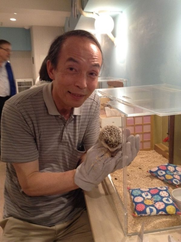 This is a scene at a hedgehog cafe, which I visited with my guests.  You can hold a hedgehog like this even without gloves.