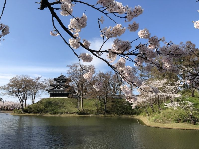 Takada Park in spring.  4,000 cherry trees cover the park.  This is a former castle site and one of the biggest of its kind in Japan.  MATUDAIRA Tadateru, the sixth son of the first Shougun TOKUGAWA Ieyasu, built the castle in 1614.   You can enjoy walking throughout the year in the park.