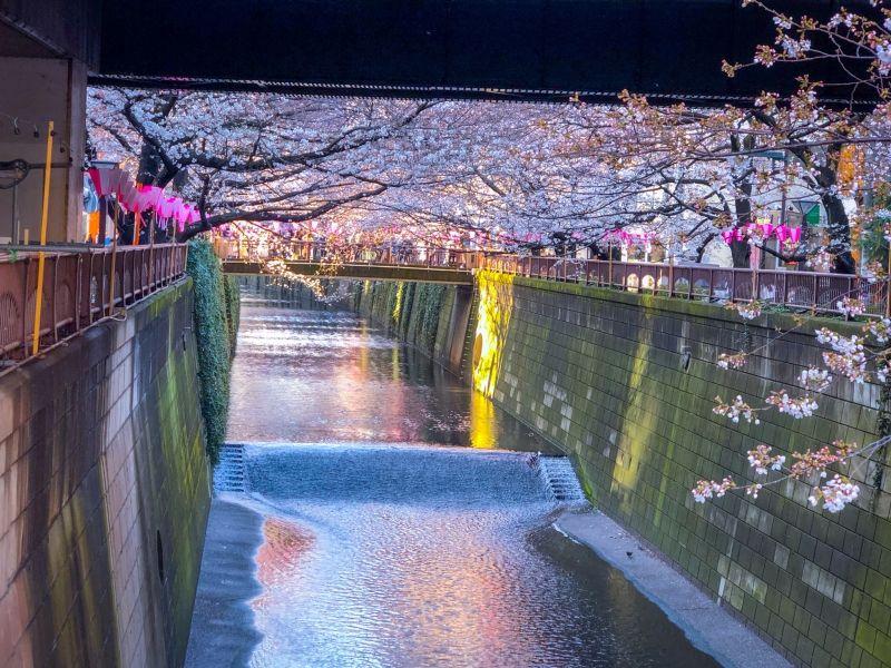 Cherry Blossoms along Meguro River, Tokyo