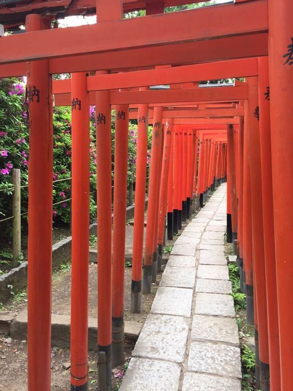 When you go through this red torii tunnel, your dream may come true!!