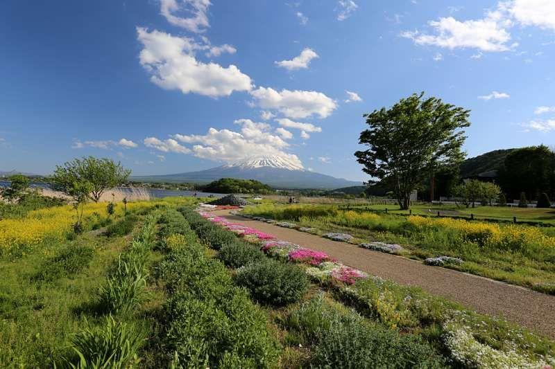 Oishi Park is one of the best Mt. Fuji viewing spots. You can enjoy beautiful Mt. Fuji in each season. I love Mt. Fuji in winter.