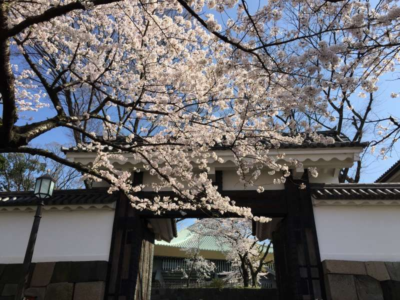 Cherry blossoms at a gate leading to the Imperial Palace grounds