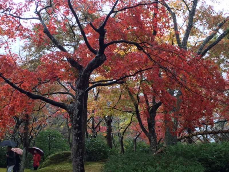 I enjoy beautiful colored leaves around Tokyo every year.