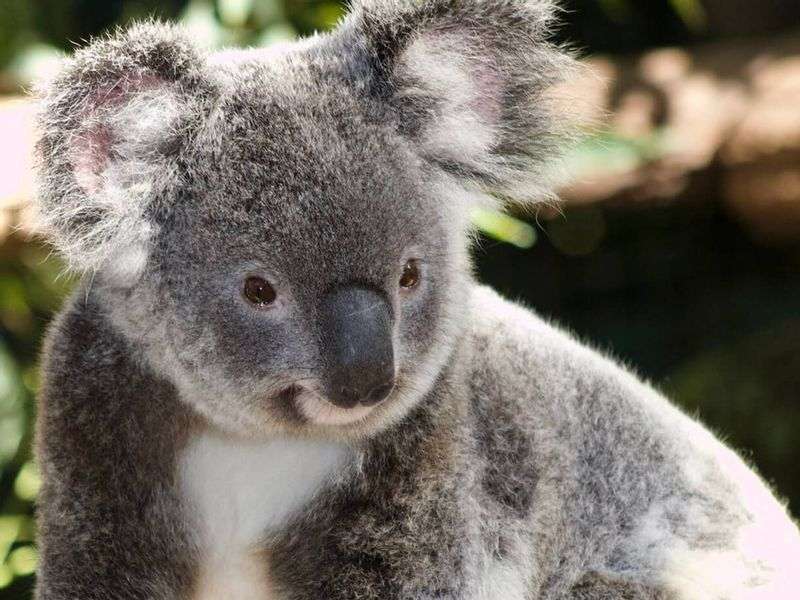 Get up close with all your favourite Australian animals