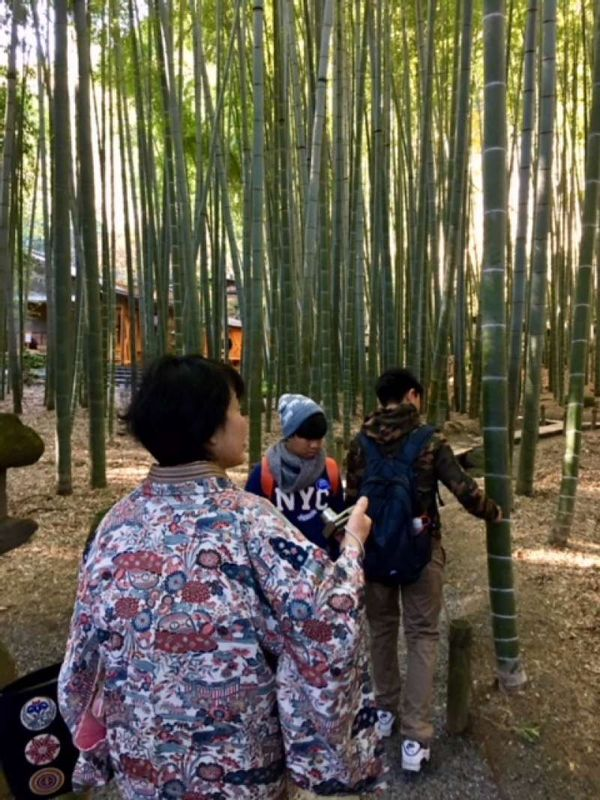 The air is so refreshing here in the bamboo grove.