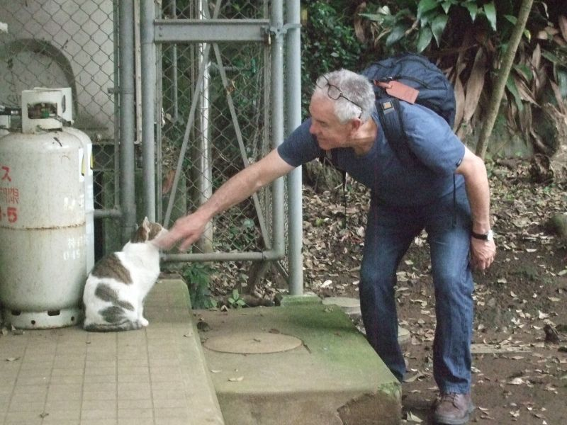 Enoshima cats (Eno Neko) are also popular.