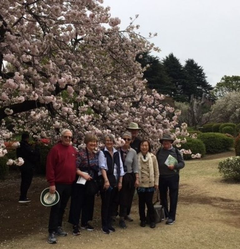 A wonderful group from Toronto, Canada, at Shinjuku Gyoen, April 2019