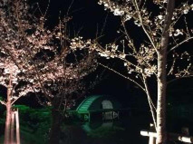 Night Sakura at Shukkeien Japanese Garden in Hiroshima.