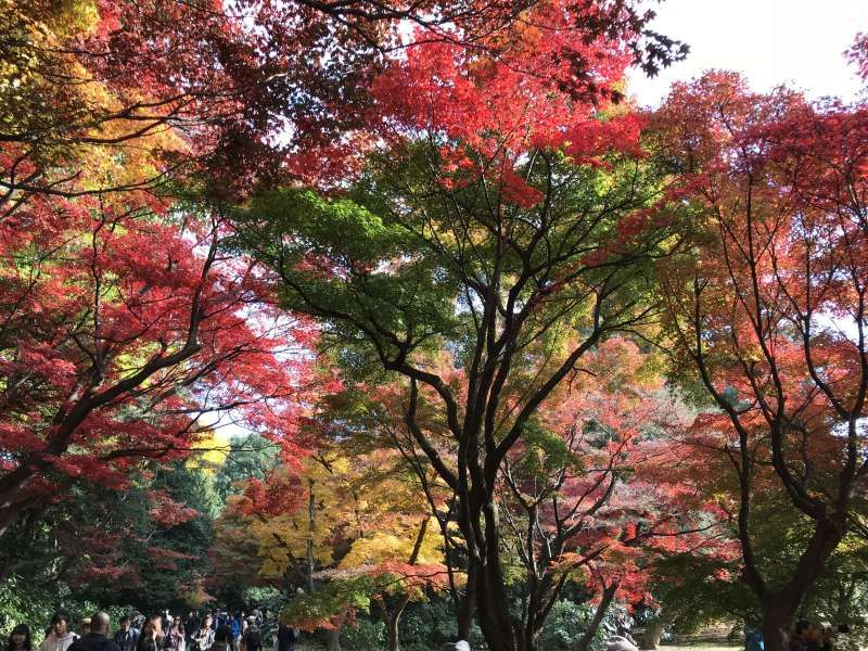 Colorful Autumn Leaves at Shinjuku Gyoen National Garden