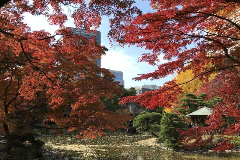 Beautiful Autumn leaves at Hibiya Park
