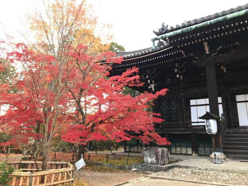 Off the beaten path temple in Kyoto. It is unlike another busy sightseeing spots in Kyoto. I'd like to introduce you gem-like calm temples.