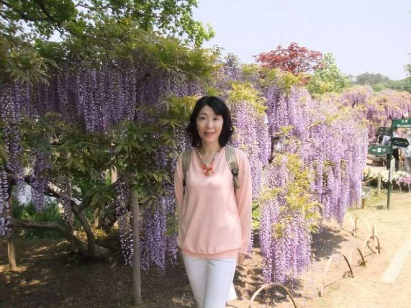 Even if cherry blossoms finish,  wisteria will continue to bloom.  At Ashikaga Flower Park.