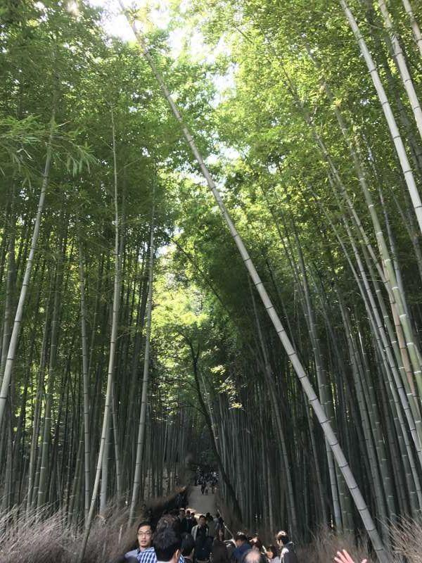 Bosque de Bambu(Kioto)