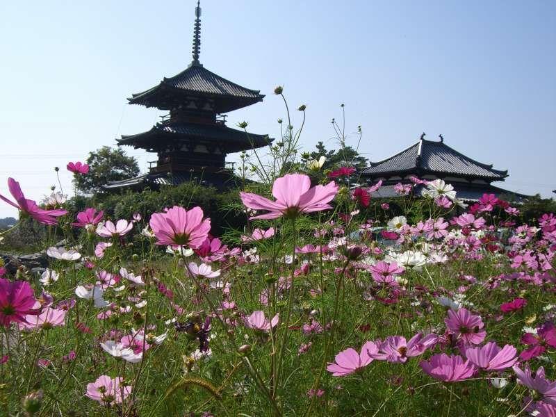 Houkiji temple: Autumn of Ikaruga area