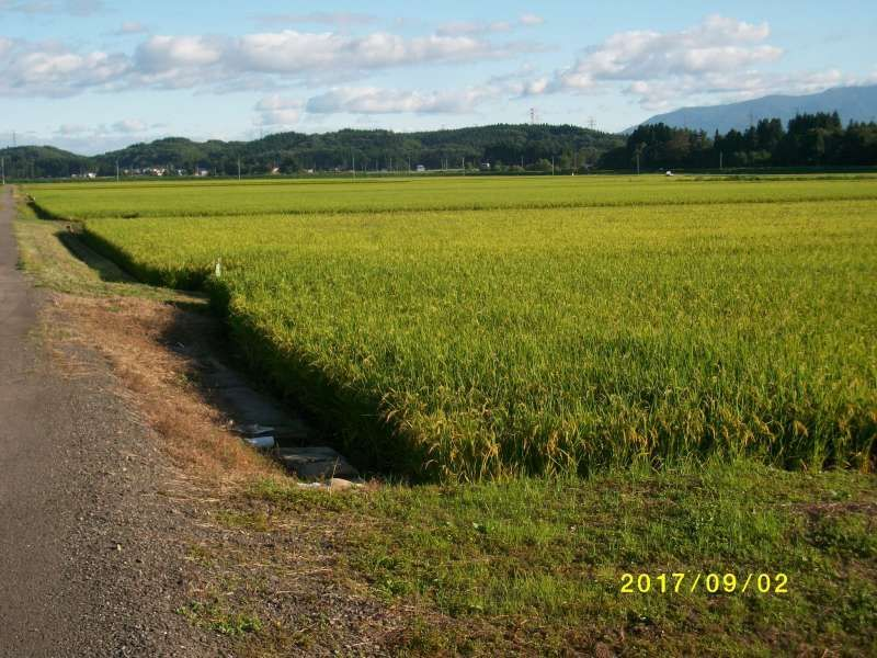 Paddy  Field and The Blue Sky