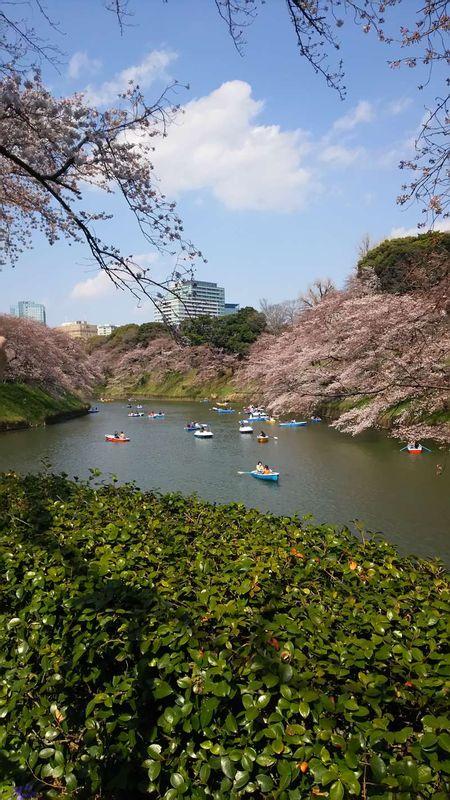Chidorigafuchi moat around the Edo castle. Famous for cherry blossoms.