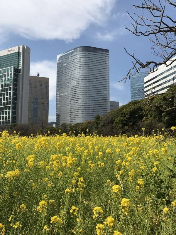Hamarikyu Garden & Skyscrapers