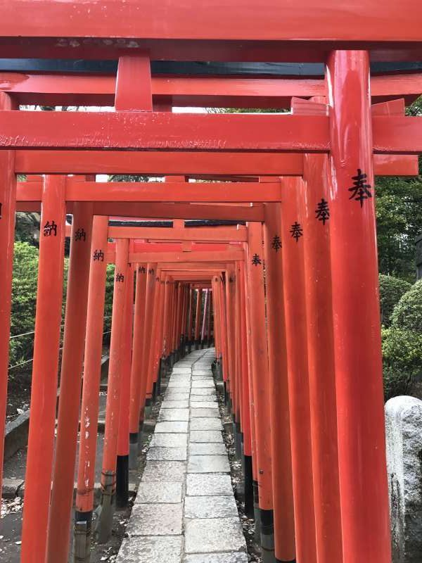 Red Torii at Nezu Shrine