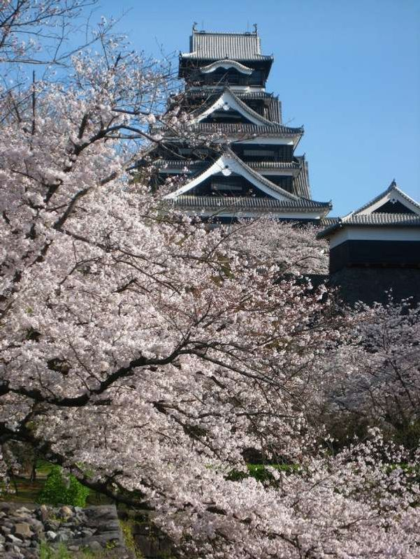 Please come to Kumamoto during cherry bloosom season (late March through early April).  Having a cherry viewing party under cherry trees in bloom is so much fun.  Of course with beer and local specialities!!