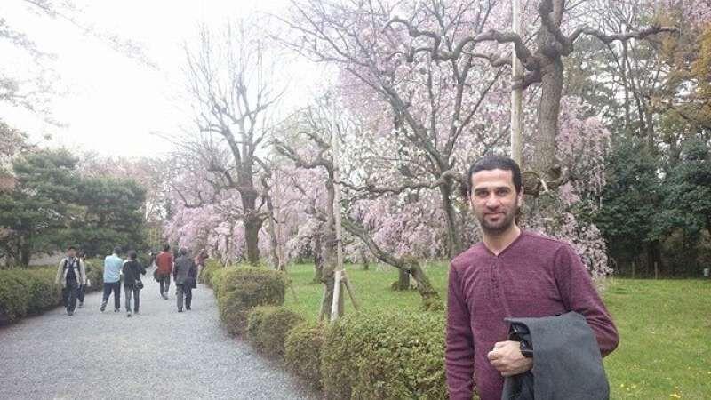 The Sakura in Kyoto