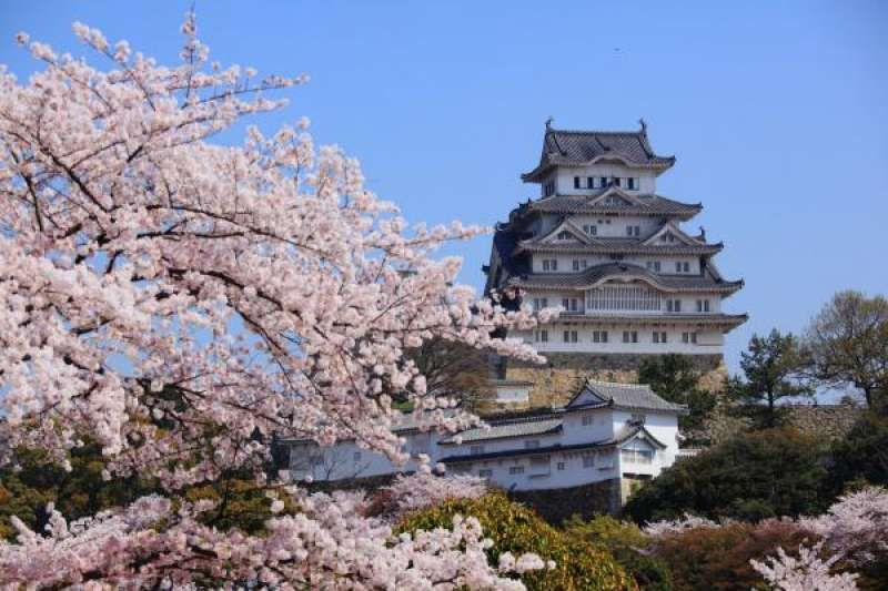 Himeji Castle in early April, Japan's first World Heritage Site which was also ranked #9 out of top 30 attractions in Japan by international travelers by Trip adviser, 2019.