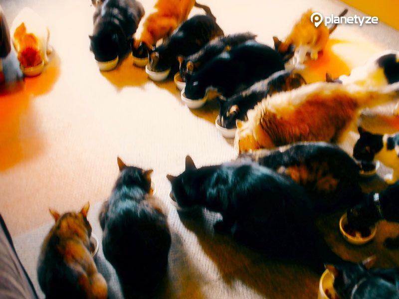 Neko no Iru Kyukeisho Ni-Kyu-Kyu (Cat Café 299)