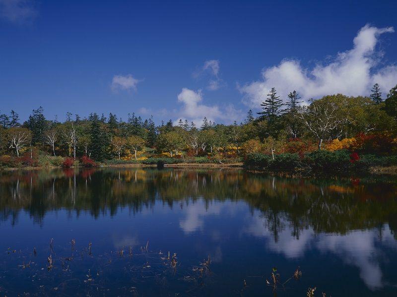 Shinsen Marsh
