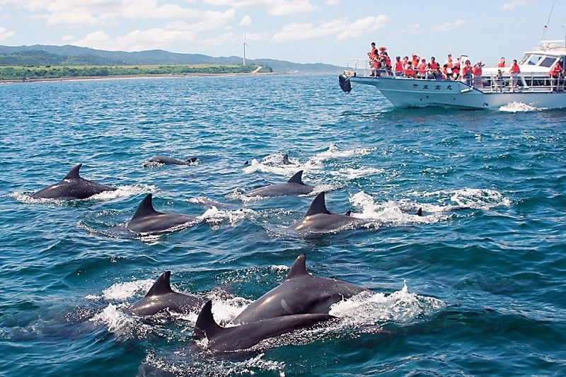 Kazusa Dolphin Watching