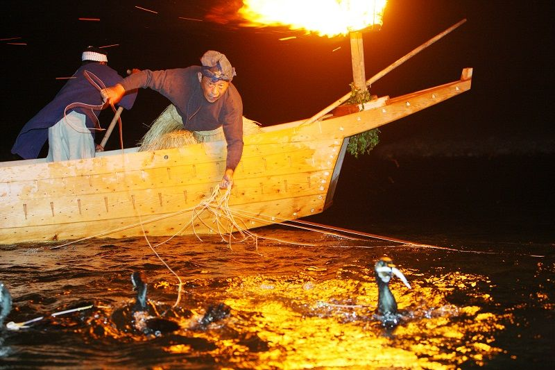 Nagara River Cormorant Fishing (Ukai)