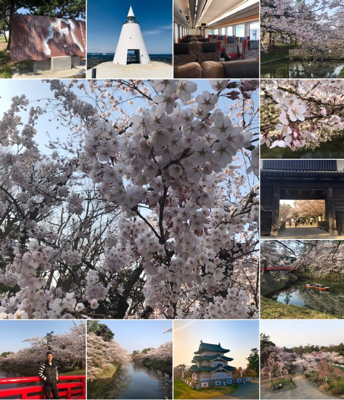 HIROSAKI in Aomori Pref: the most beautiful place to see cherry blossom in Japan!