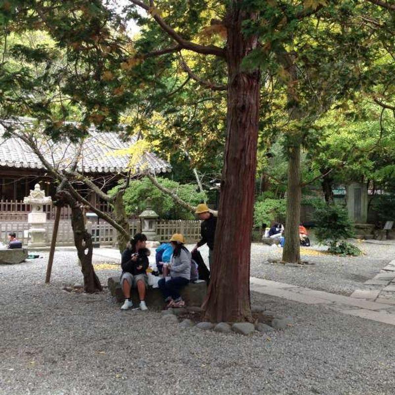Backyard of the Great Buddah statue