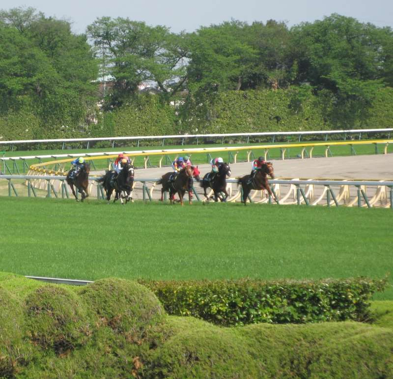 As an example of unique experience, Horse Racing betting tour