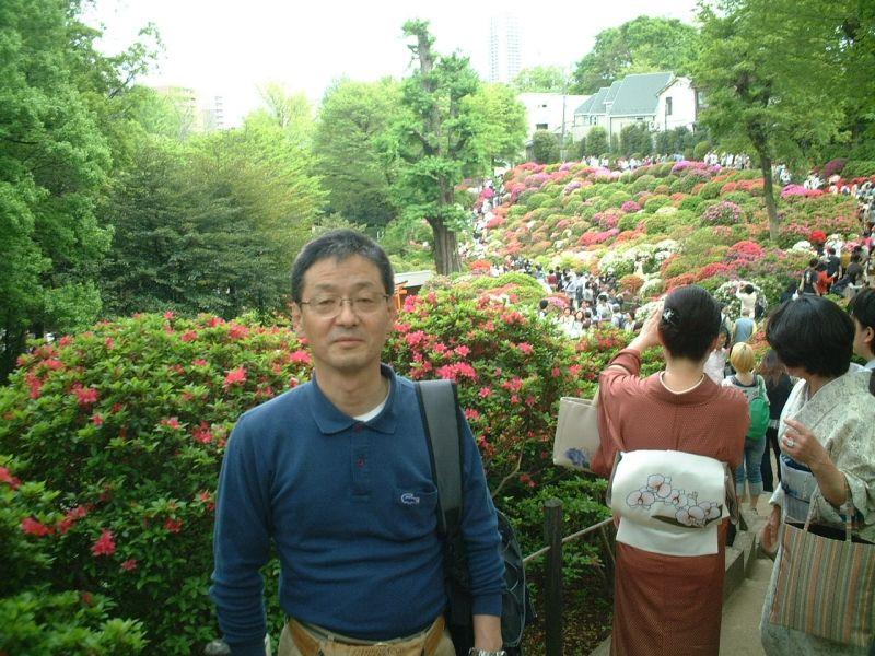 Nezu Shrine : Azalea in full bloom.