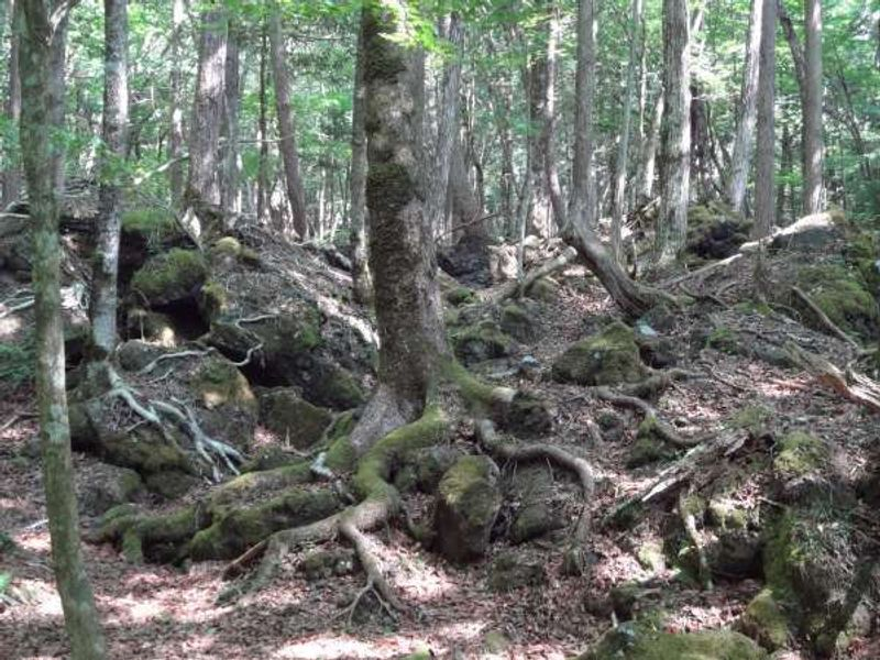Aokigahara Lava Forest
