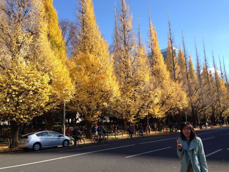 The street toward the Meiji Memorial picture gallery is lined up with 100-year-old ginkgo trees.