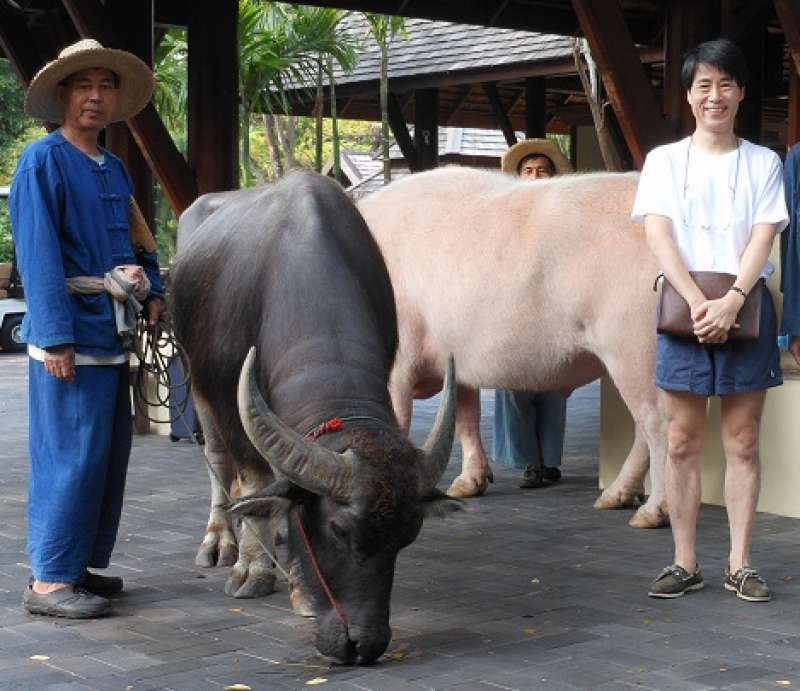 This is Chiang Mai in Thailand.
